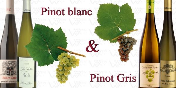 PINOT BLANC & PINOT GRIS